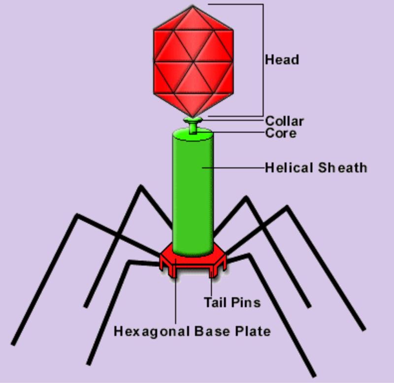 Как самому сделать вирусы