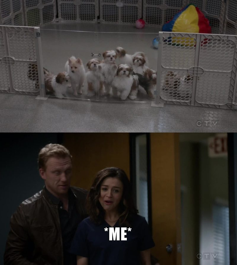 PUPPIES ARE ALWAYS THE SOLUTION! 😍 😍 😍