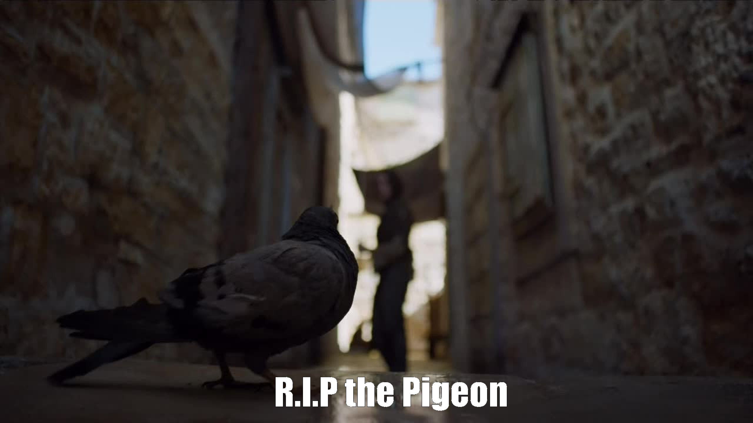 An other terrible death in this episode. G.R.R has really no limits. Rest in peace. You won't be forgotten #thepigeon