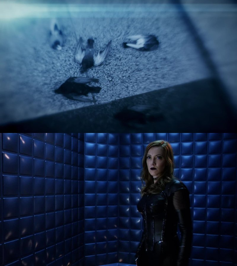 Am I the only one who thought Cisco saw birds because the black canary's doppelganger was here ?