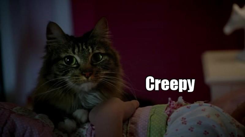 """Les chats domestiques sont ceux qui me font le plus """"peur"""". Surement parce qu'on a toujours l'impression qu'ils préparent un plan machiavélique contre nous, en temps normal."""