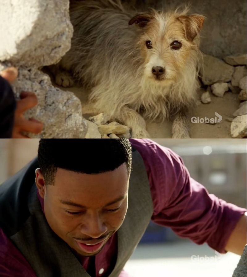 I loved Bozer in this episode. He helped he dog when everyone refused!!!