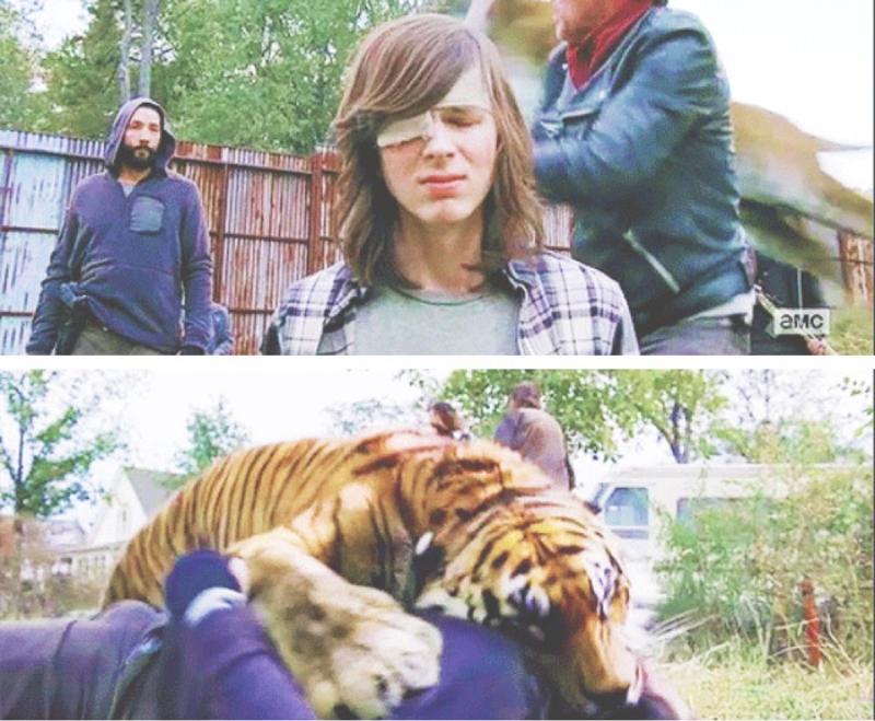 SHIVA SINGLE HANDEDLY SAVED CARL'S LIFE. SAVED ALEXANDRIA. SAVED THIS FANDOM. SAVED ME.