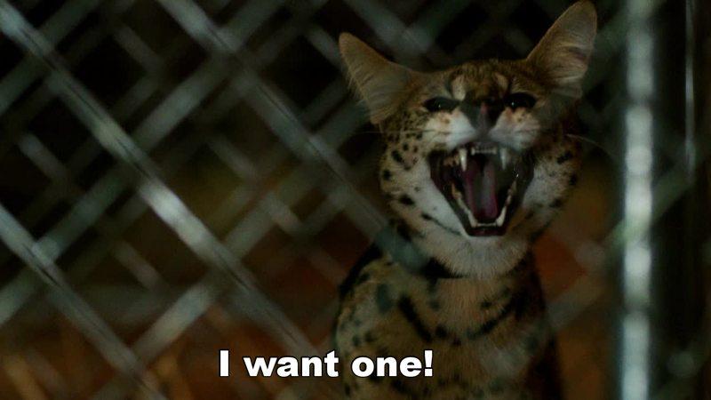Love this cat, Serval.  =^.^=