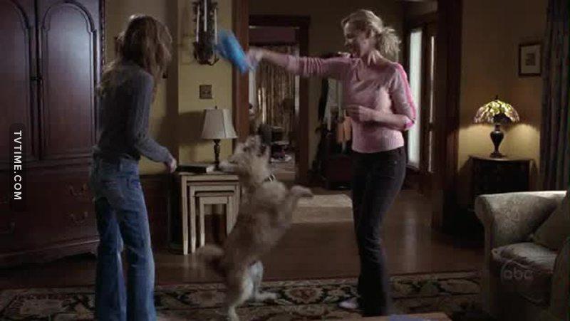E assim vemos duas mulheres que escolheram um cachorro ao invés de sofrerem por macho