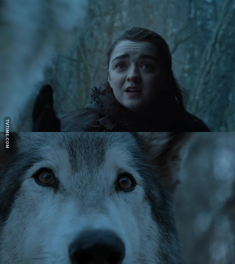 Arya: Nymeria! I'm headed north, I'm going home. Come with me.  Nymeria: A wolf has no name.