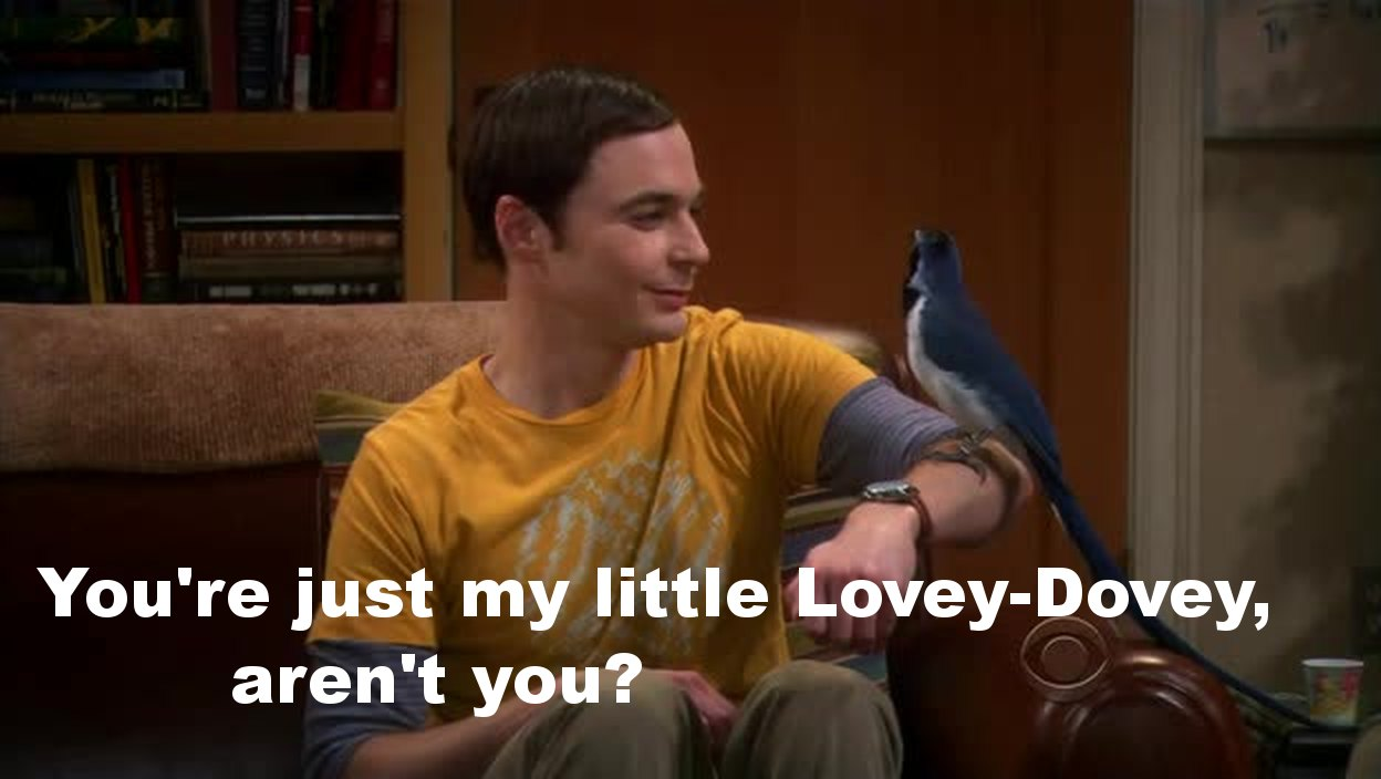 Sheldon was so cute with his bird friend!