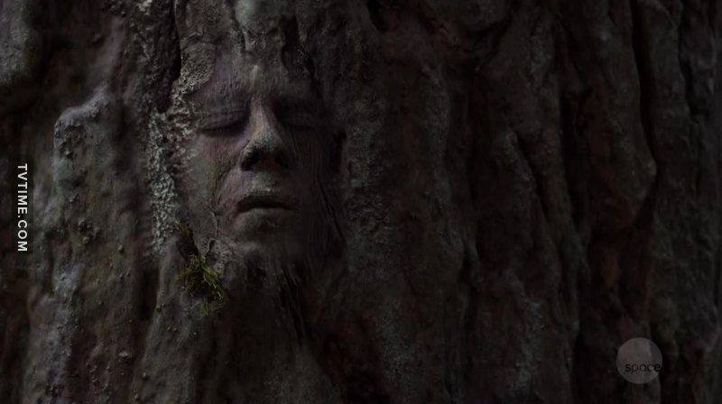 Anybody thought Stone would end up in that tree forever?