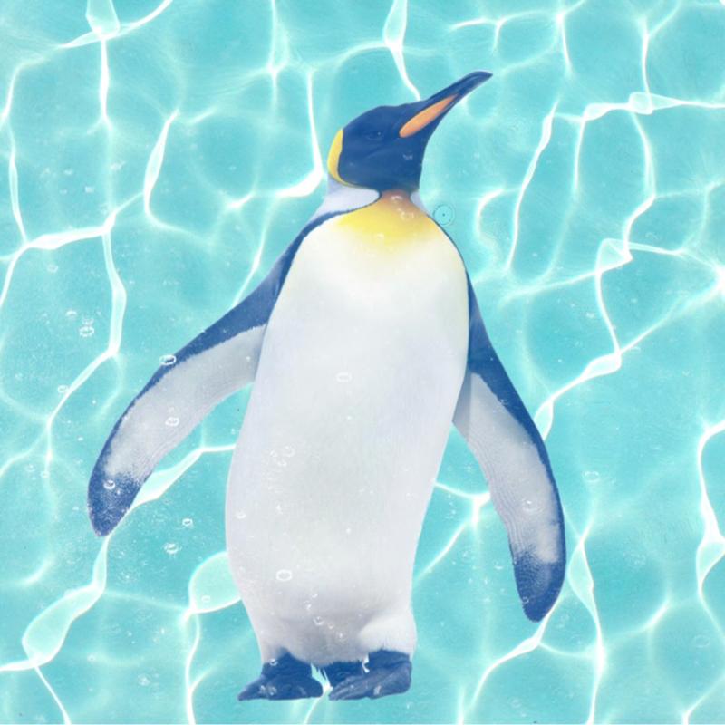 Pinguim episódio 15 dos pinguins etitores