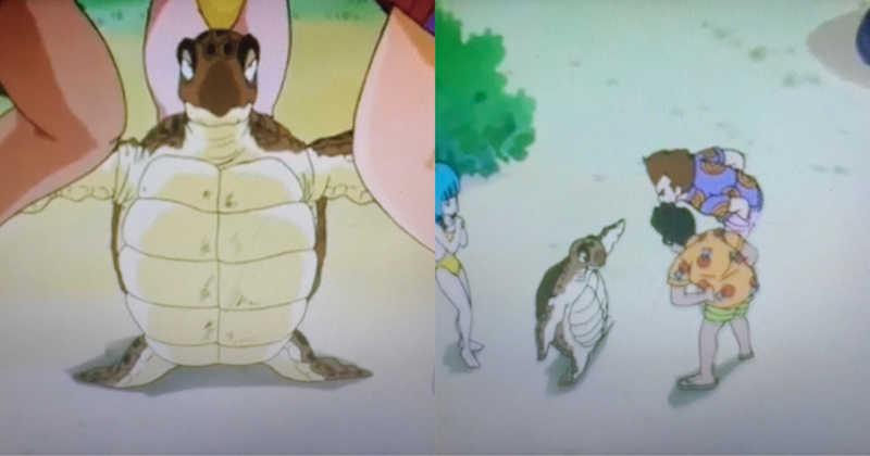 muito corajoso essa tartaruga 😂👏🏽💕