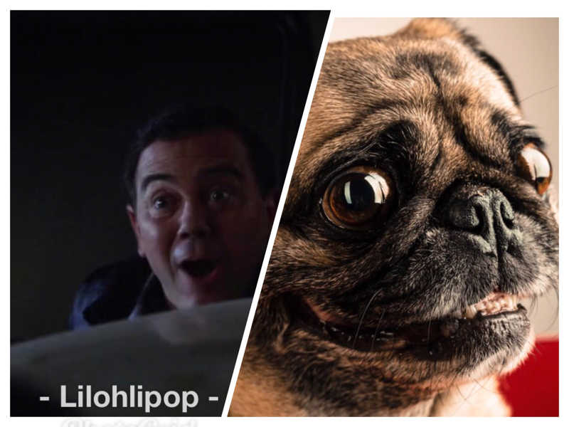 Am I the only one to think that Boyle (so bad ass in that episode) looks like an adorable pug?
