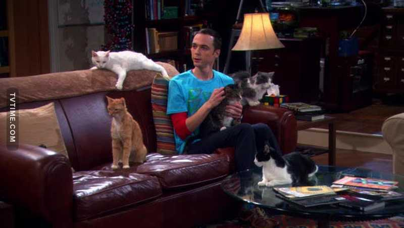 sheldon with cats it the CUTEST THING EVER.😻
