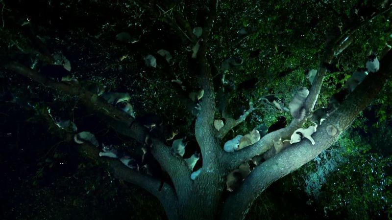 Oh un arbre à chat !