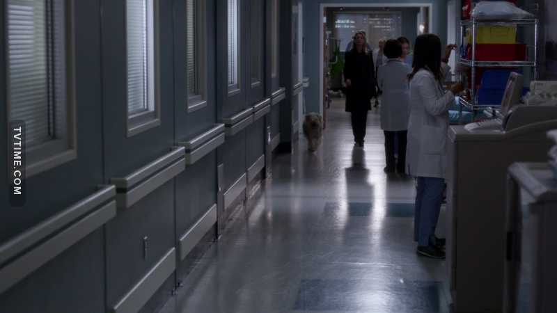 They didn't forget to mention Meredith dog! HOW HEARTBREAKING 😭😭😭 Really cute ❤️
