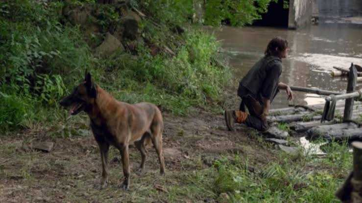 """What really came to my attention was Daryl's creativity naming his dog as """"Dog"""".👏🏼👏🏼👏🏼😂😂😂"""