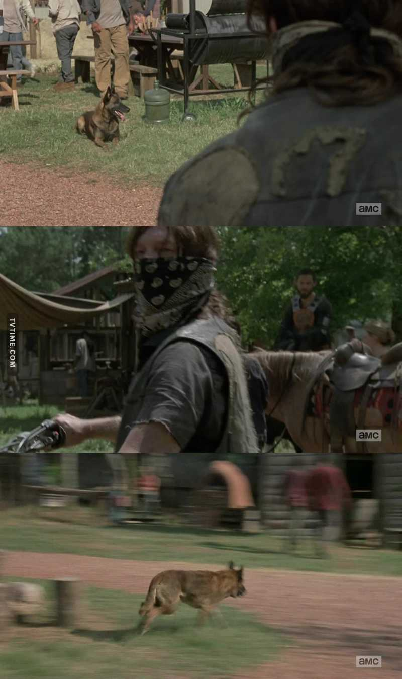 Daryl's new best friend since Rick disappeared after the explosion! Dog 🐕