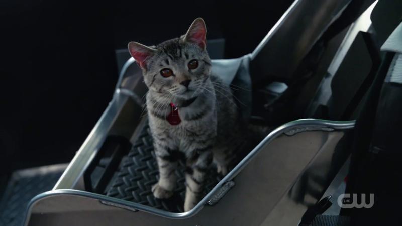 As a cat, Zari is still the best!