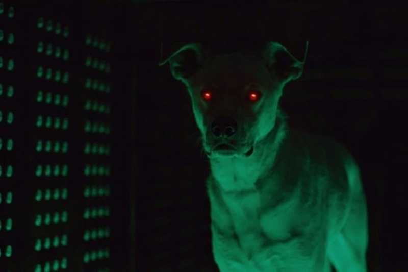 I was not prepared for this... krypto has arrived!!!!!