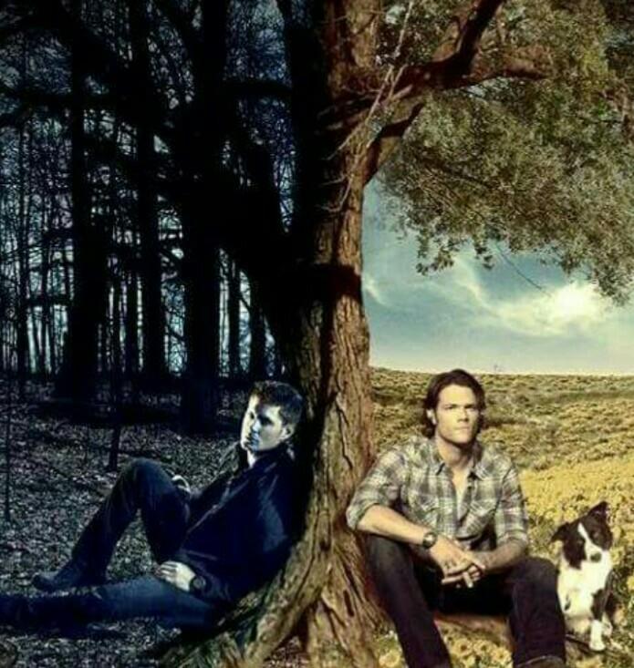 """""""I went to purgatory. Sam hit a dog."""" 😂😂💕"""
