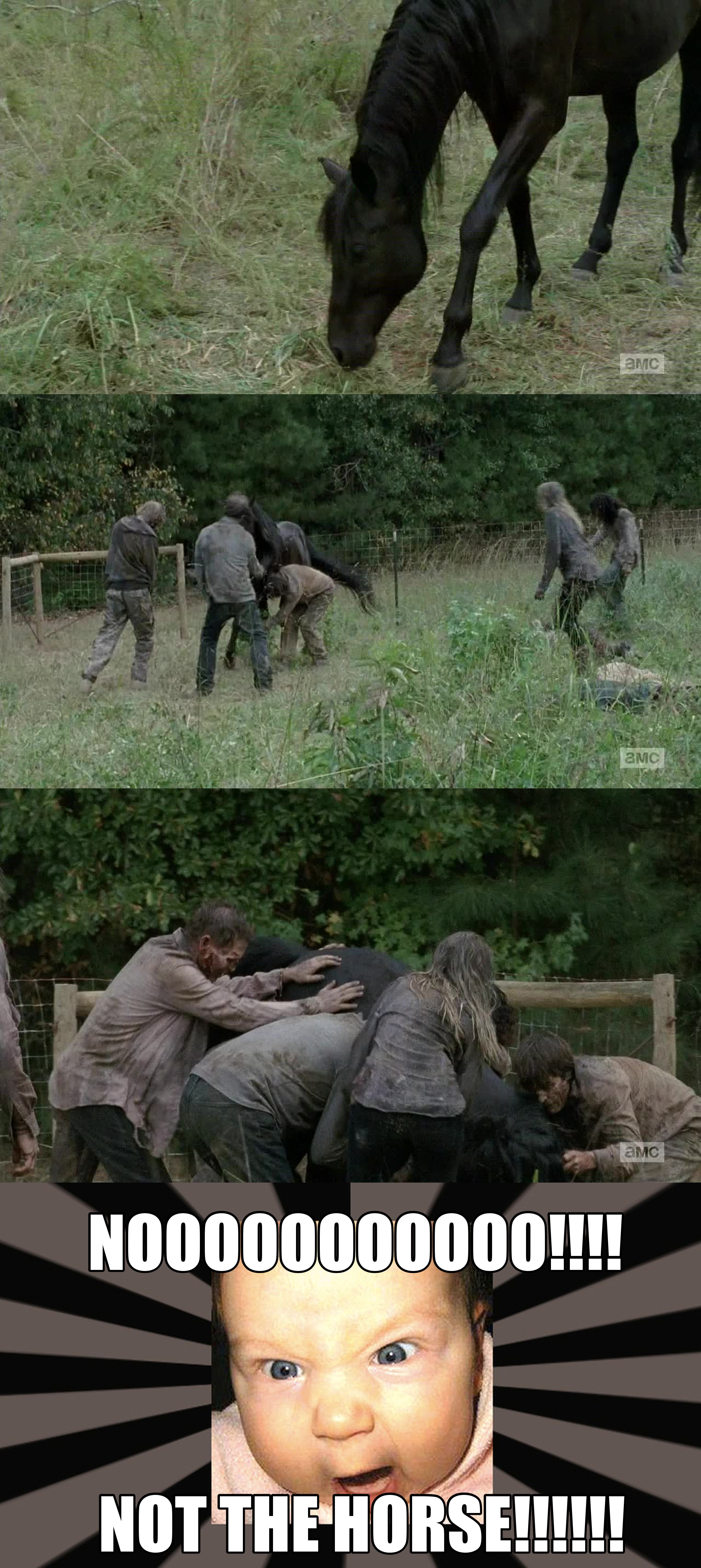 Me watching this scene! Horse appears for one episode and I like him better than half of the people... and when he dies, oh the RAGES!