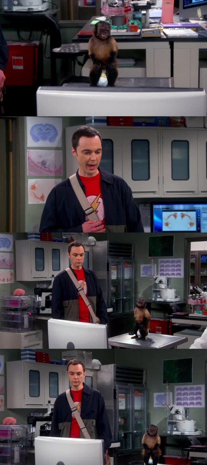 J'ai adoré la scène avec Sheldon et le singe